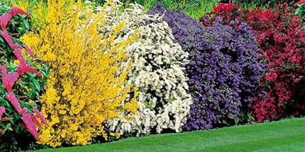 Кустарники и вересковый сад